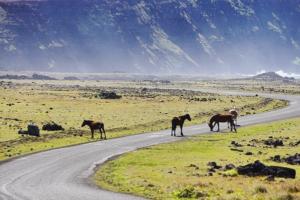 peligros al volante en la carretera animales